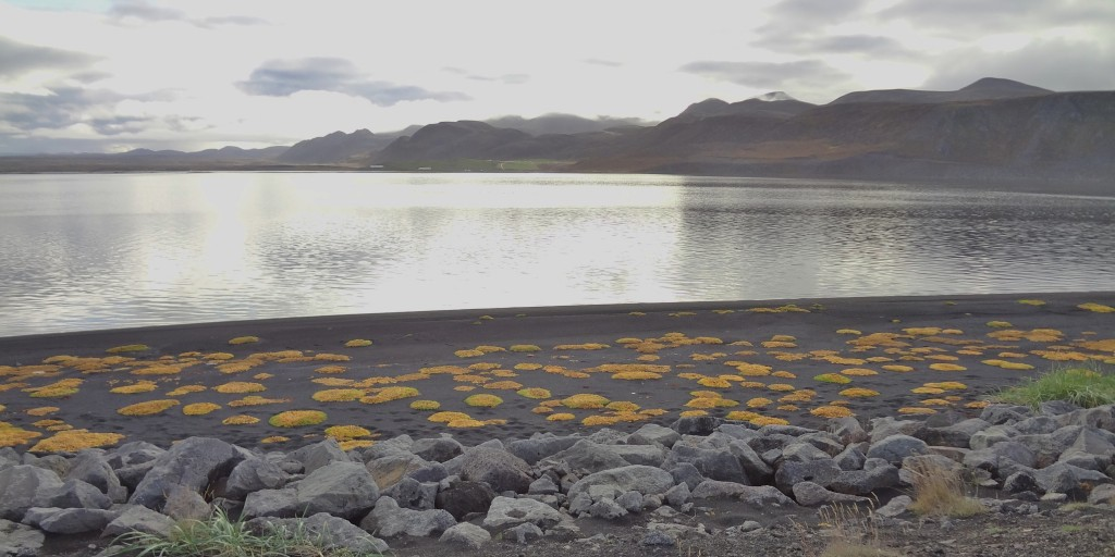 Part of the shoreline in Northern Iceland