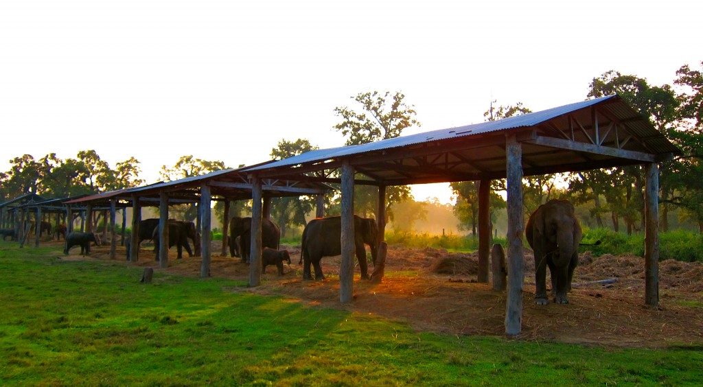 Elephant Breeding Center - Chitwan National Park