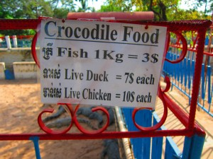Crocodile farm in Siem Reap