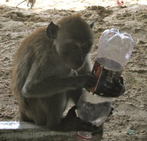 Monkeys & Beaches of Krabi, Thailand